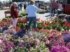 flower-daze