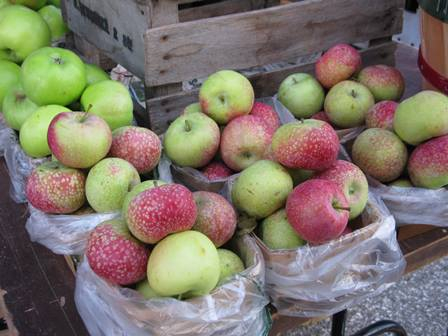 apples-for-gallery
